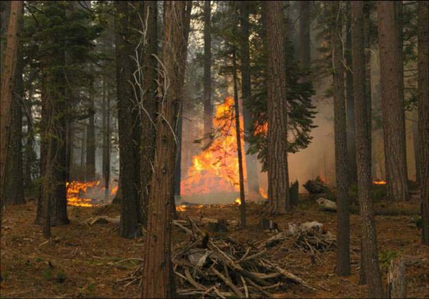 Burn piles ignite forest--American Complex fire