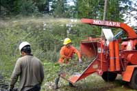 Men working with wood chipper