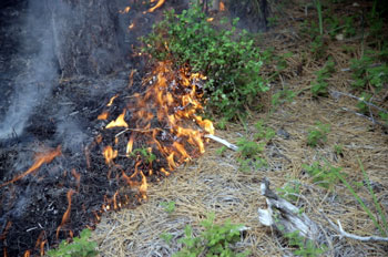 Burning Litter