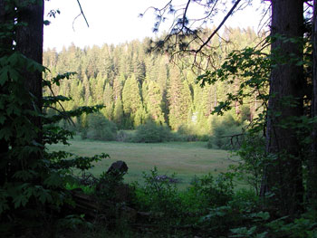 Sierra Meadow
