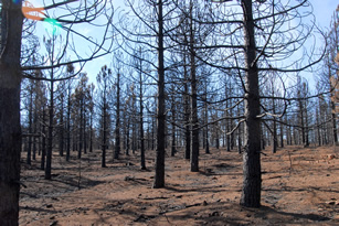 Plantation burned in King Fire